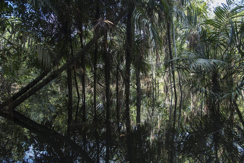 Alter do Chao, Para, Brazil