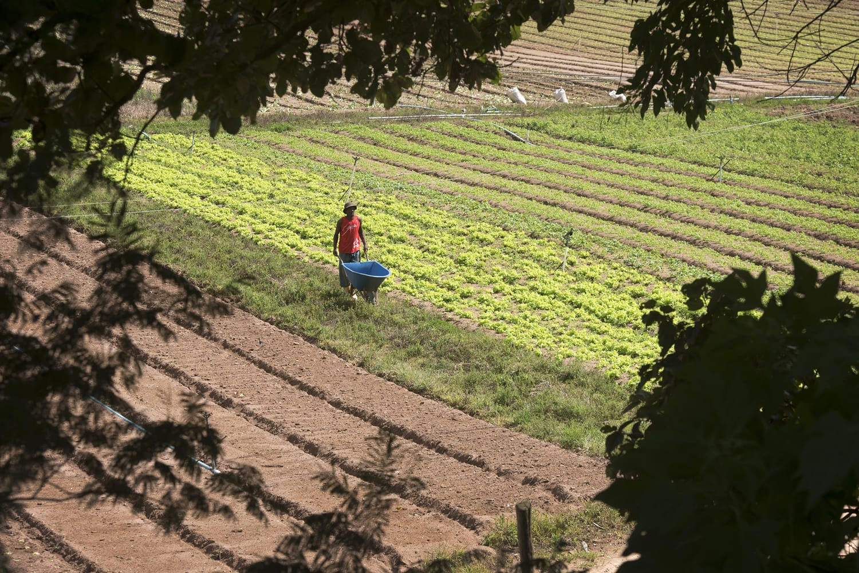 Agricultura, Sapucaia, Rio de Janeiro